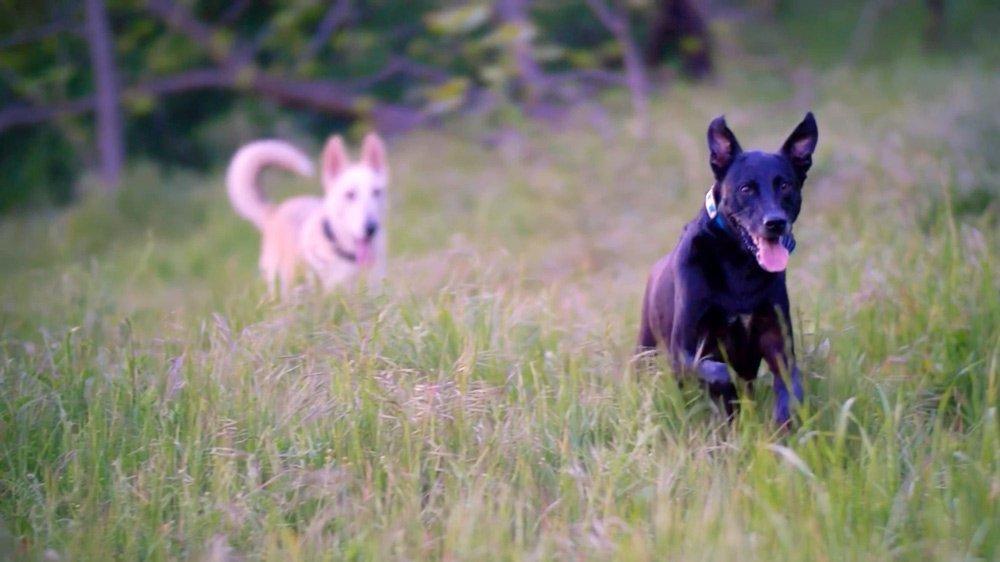 How I Keep My Dogs Happy + Healthy